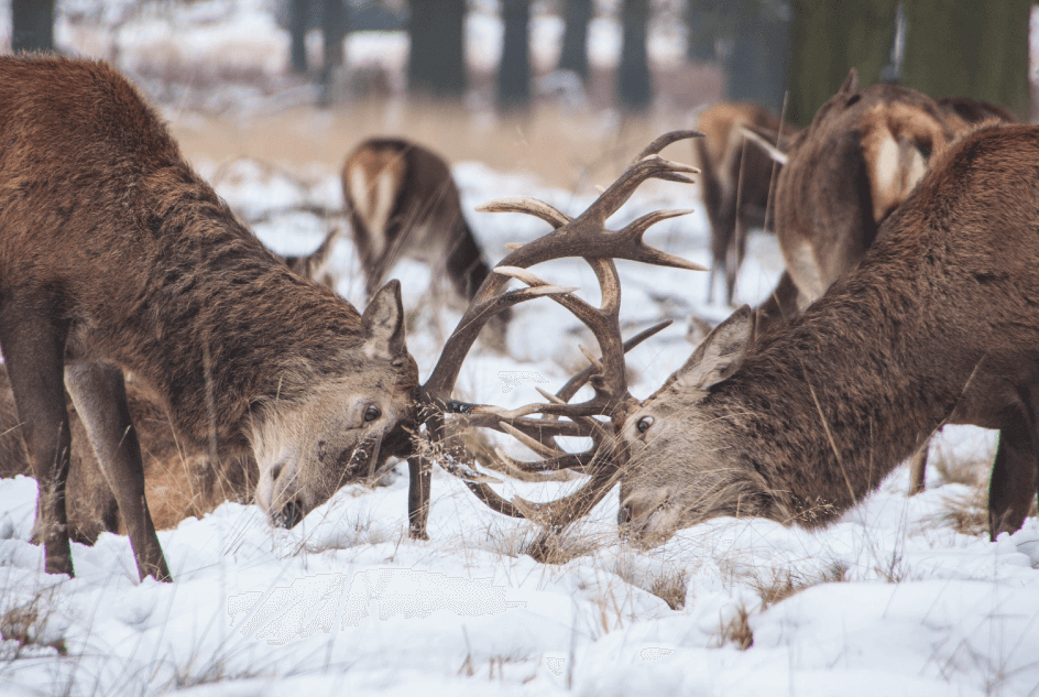 social media competitors competition analysis on digital deer fighting