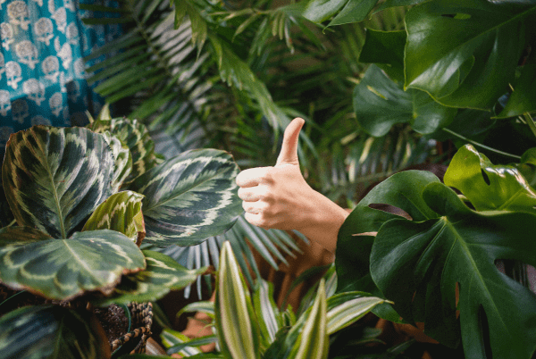 best social media campaigns had in nature showing thumbs up